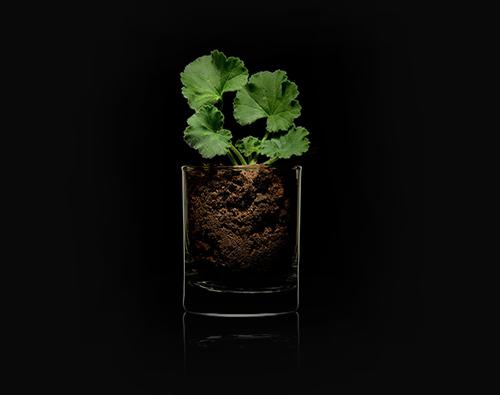 Glas mit einer Pflanze im Innern